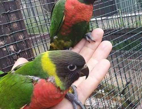 Heidelberg: Wertvoller und farbenfroher Nachwuchs im Zoo