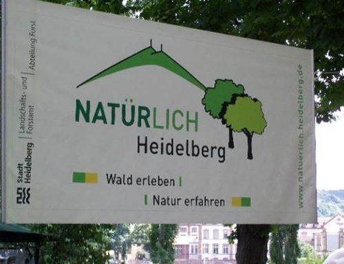 Heidelberg: Den Herbst in der Natur erleben