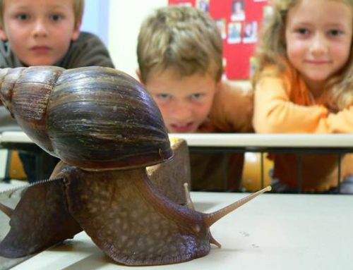 Heidelberg: Den Zoo und seine tierischen Bewohner intensiv kennenlernen