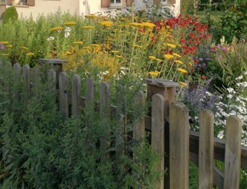 Heidelberg: Für mehr Insektenschutz und Artenvielfalt