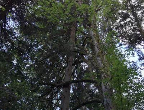 Mannheim: Gemeinderat beschließt Entwicklungsplan für den Stadtwald