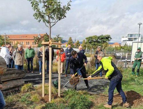 Landau: Lions Club pflanzte zwei Stieleichen im Südpark