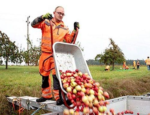"""Rhein-Neckar-Kreis: """"Reifes Obst für neue Bäume"""""""