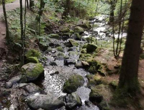 """Ludwigshafen: Vortrag """"Der Wald im Klimastress"""""""