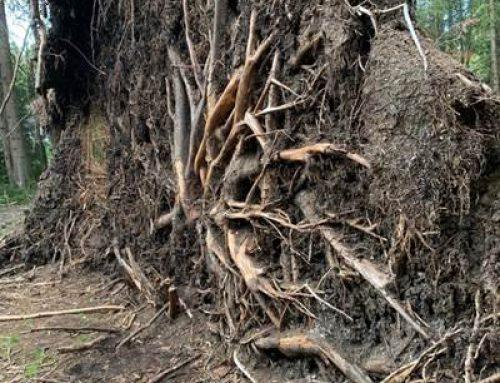 BUND Hessen: Mehr Tempo bei der Energiewende und Schutzmaßnahmen für alte Wälder