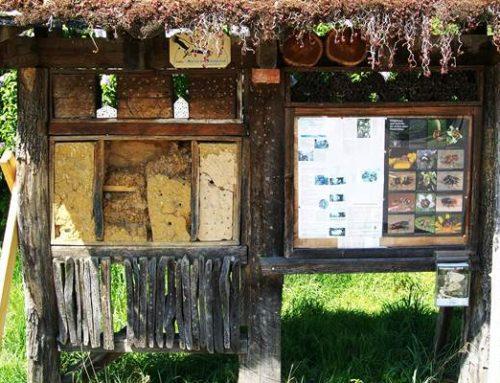 Insektensterben auch in Baden-Württemberg noch massiver als gedacht