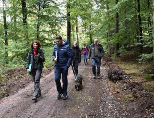 Landau: OB und Forstdezernent informierten sich über Zustand des Stadtwalds