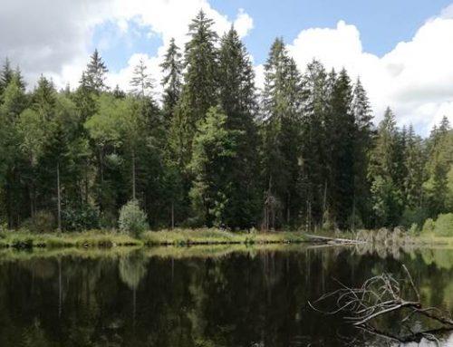 """Buchtipp: """"Unser grünes Herz"""" – Über die Wälder der Südlichen Weinstraße"""