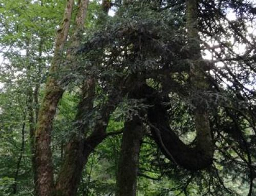 Rheinland-Pfalz und Bund unterstützen kommunale und private Waldbesitzende