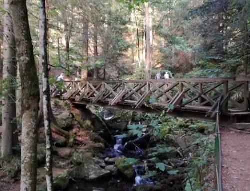 Rheinland-Pfalz: Waldzustandsbericht 2020 veröffentlicht