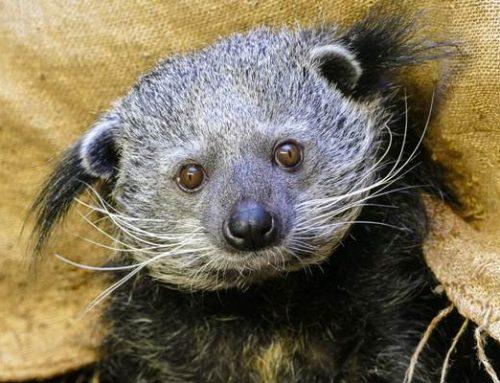 Heidelberg: Ein Stück Zoo für Zuhause