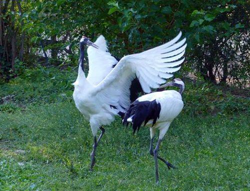 Im Zoo Heidelberg leben 160 Tierarten