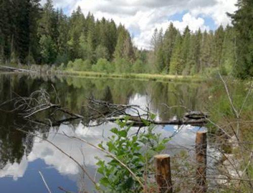 """""""Welttag der Feuchtgebiete"""" und 50 Jahre Ramsar-Konvention"""