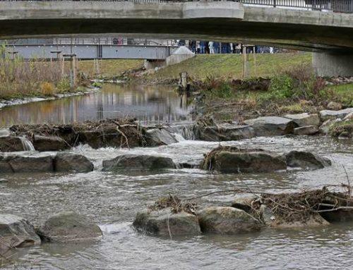 Hockenheim: Gehölzrückschnitt am Hochwasserschutz- und Ökologieprojekt (HÖP)