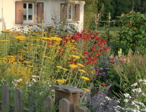 Bad Dürkheim: Der klimagerechte Garten – Was ist zu tun?