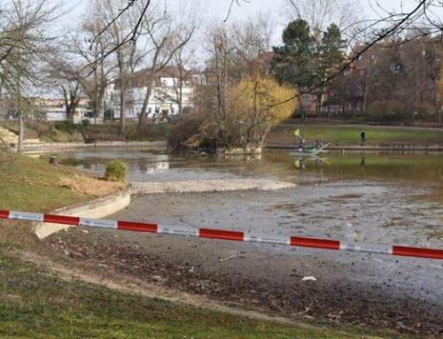 Stadt Landau startet mit Ablassen des Wassers aus dem Schwanenweiher