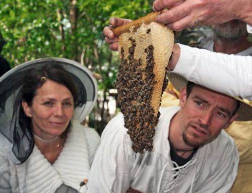 """Ketsch: Imkerkurs """"Mit den Bienen durchs Jahr"""""""