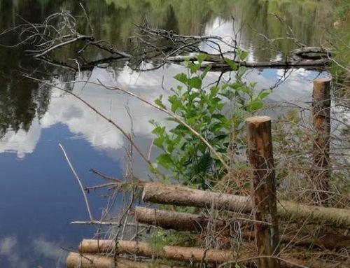 Hessen: 34 Naturwälder im Staatswald sollen Naturschutzgebiete werden
