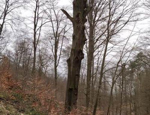 Heidelberg: Baumtorso als Biotop für Insekten und Vögel
