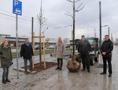 Heidelberg: Grüne Meile in der Bahnstadt wird zur grünen Allee