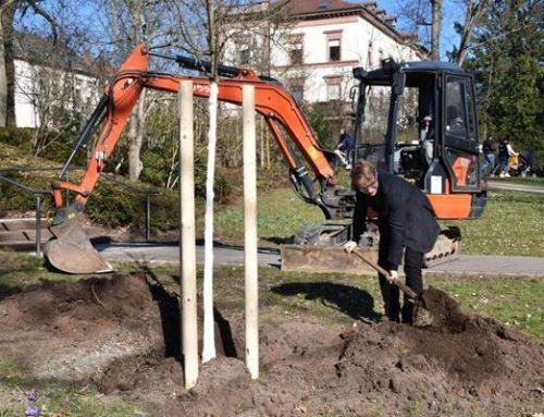 Stadt Landau ersetzt 193 abgängige Bäume