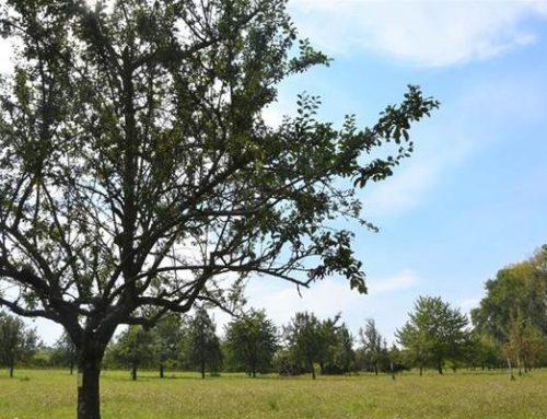Stadt Landau unterstützt Mitmachprojekt der Aktion Südpfalz-Biotope