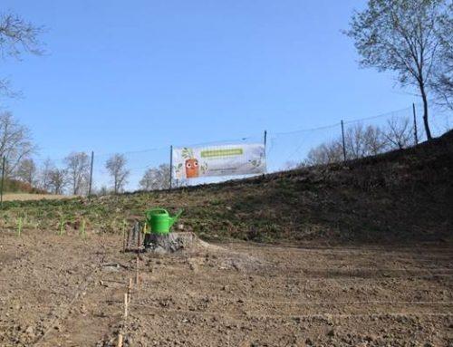 Sinsheim: Erlebbare Umweltbildung
