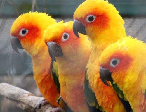Vogelpark Viernheim derzeit geschlossen – Unterstützer gesucht