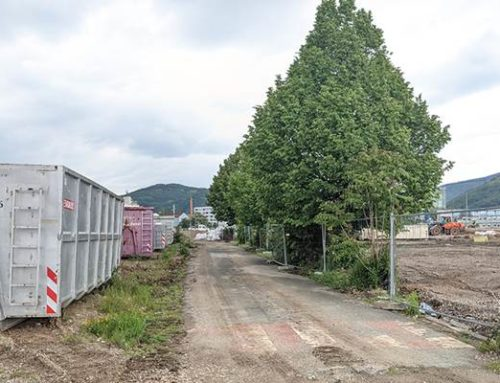 Heidelberg-Bahnstadt: Großbäume werden verpflanzt