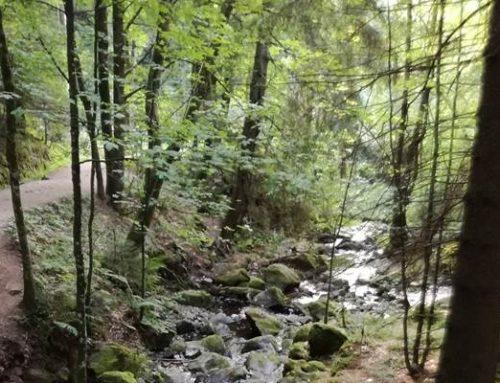 Heidelberg: Umfrage soll Freizeitwert des Waldes verbessern helfen
