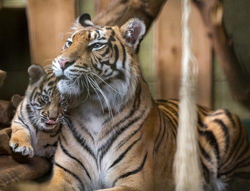 Heidelberg: Ausgewählte Programme der Zoo-Akademie starten