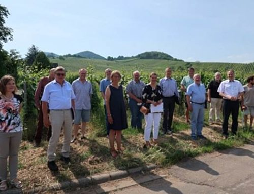 Südliche Weinstraße: Neue Zusammensetzung im Beirat für Naturschutz