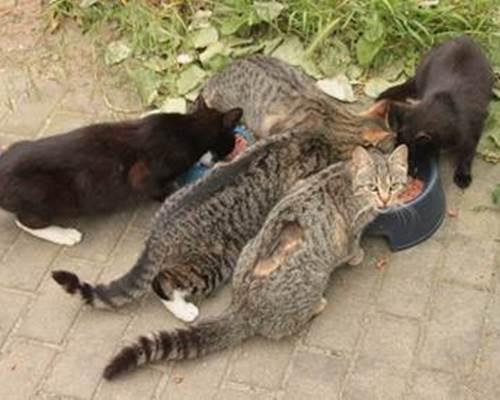 Straßenkatzen Tierschutzproblem