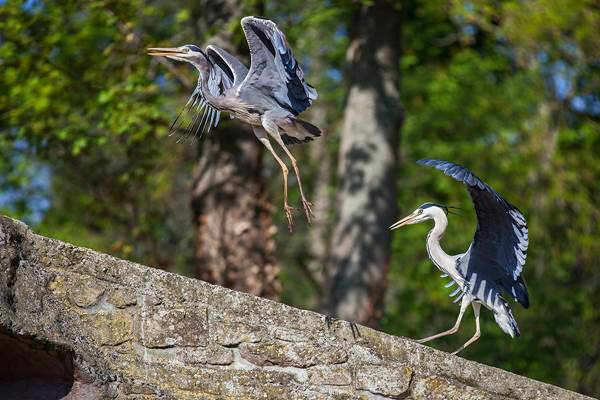 ecoGuide, Artenvielfalt, Artenschutz, Zoo Landau