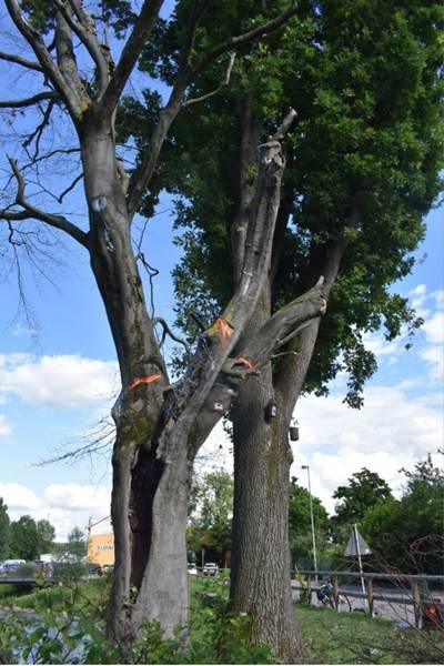 ecoGuide, Sinsheim, Bäume
