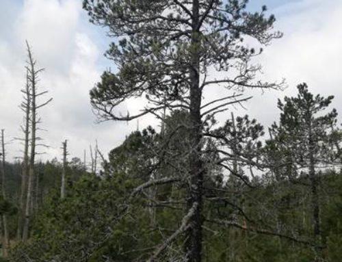 Modellprojekt im Südschwarzwald beleuchtet Waldschäden der letzten Jahre