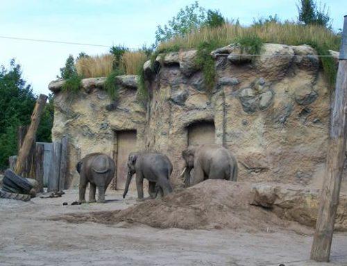 Heidelberg: Den Zoo besuchen und sich impfen lassen