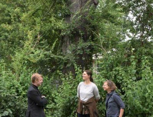Landau: Baummanager wachen über rund 35.000 Stadtbäume