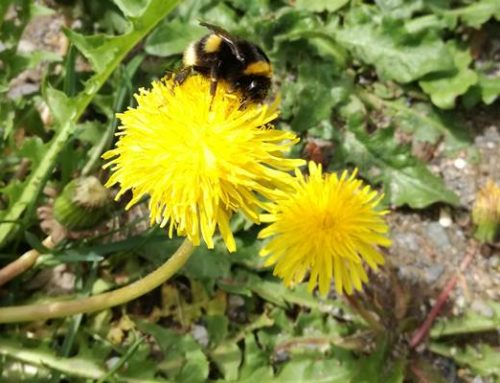 Bad Dürkheim: Insekten willkommen