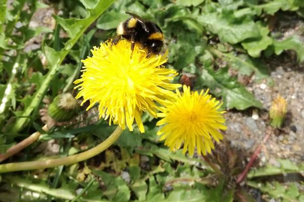ecoGuide, Insekten, Bad Dürkheim, Artenvielfalt