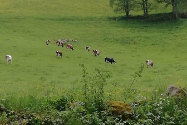ecoGuide, Welttierschutztag, Tierschutz, Deutscher Tierschutzbund