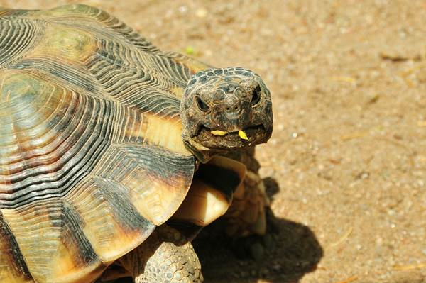 ecoGuide, Schildkröten, DGHT, Zoo Landau