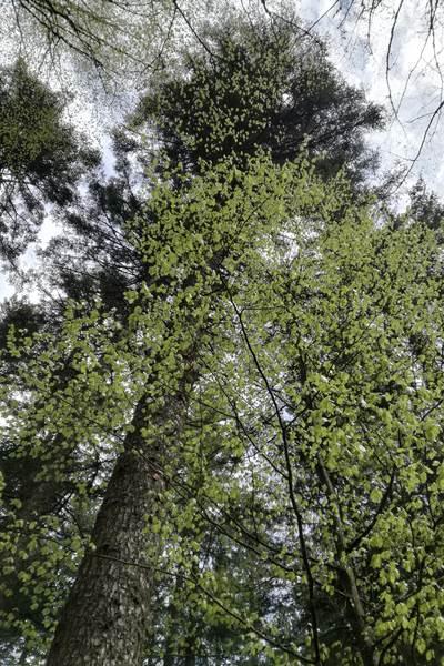 ecoGuide, Sinsheim, Baumkontrollen, Baumfällungen, Baumpflanzungen