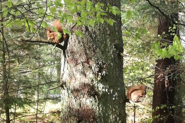 ecoGuide, Waldbegehung, Eichhörnchen, Greenpeace