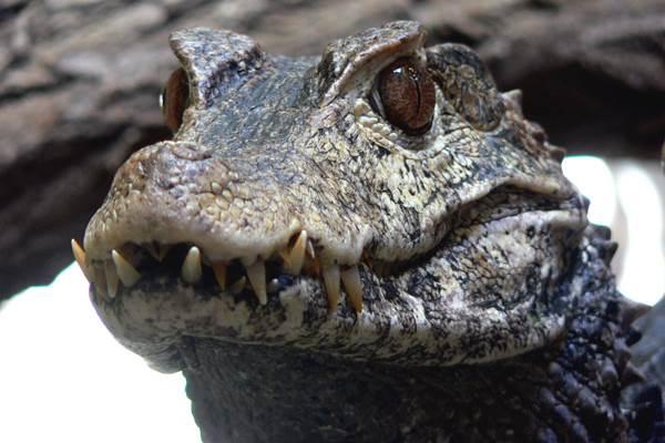 ecoGuide, Zoo Landau, Artenschutz, Zuchtprogramme, biologische Vielfalt