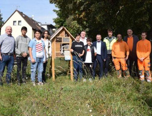 Sinsheim: Insektenhotels auf den städtischen Blühwiesen