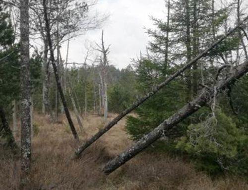 Pfalz: Der Wald stirbt – und die Politik muss jetzt handeln!