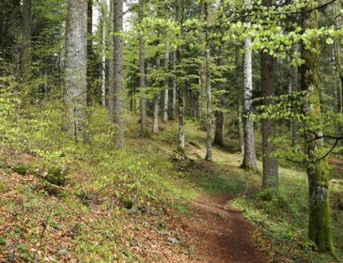 Hessen: Nachhaltigkeitsbericht von Hessen-Forst liegt vor