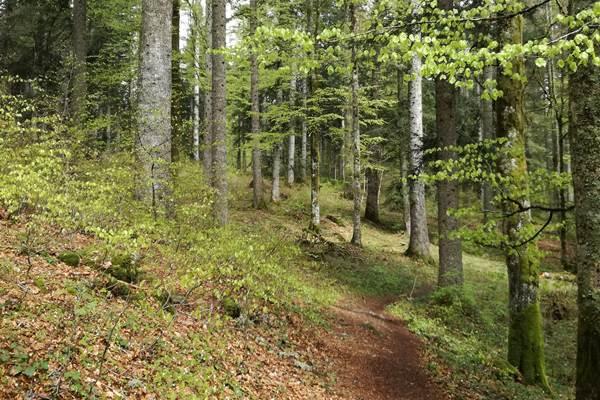 ecoGuide, Waldzustand, Hessen-Forst, Klimawandel