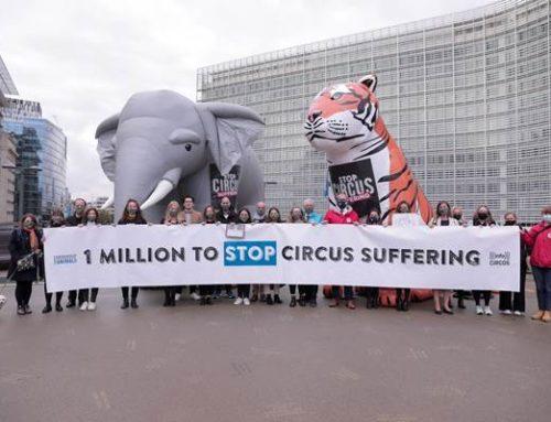Eine Million Unterstützer fordern Wildtierverbot in Zirkussen